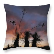 Spanish Bayonet Yucca Plants Throw Pillow by Annie Griffiths