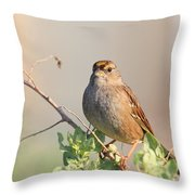 Sparrow Bird Perched . 40D12304 Throw Pillow by Wingsdomain Art and Photography