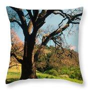 Spring Oak Throw Pillow by Kathy Yates