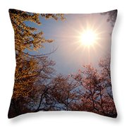 Spring Sunlight Over Cherry Blossoms  Throw Pillow by Vivienne Gucwa