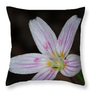 Star Of Bethlehem Throw Pillow by Paul Ward