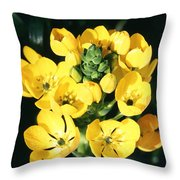 Star Of Bethlehem Throw Pillow by Science Source
