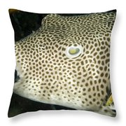 Star Puffer Fish Being Cleaned Throw Pillow by Tim Laman