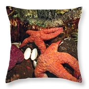 Starfish Medley Throw Pillow by Methune Hively