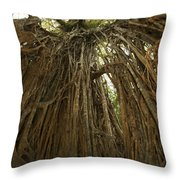 Strangler Fig Tree, Ficus Virens, Known Throw Pillow by Tim Laman