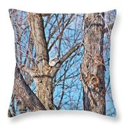 Sunning In The Tree Throw Pillow by Aimee L Maher Photography and Art Visit ALMGallerydotcom