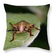 Terrestrial Turtle Bug Throw Pillow by Ted Kinsman