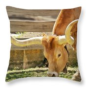 Texas Longhorns - A Genetic Gold Mine Throw Pillow by Christine Till