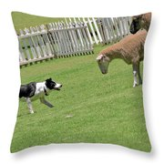 The stare - Border Collie at work Throw Pillow by Christine Till