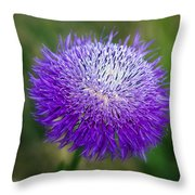 Thistle I Throw Pillow by Tamyra Ayles