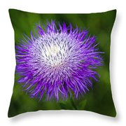 Thistle II Throw Pillow by Tamyra Ayles