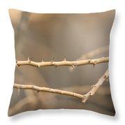 Thorny Desert Plant Inside The Desert Throw Pillow by Joel Sartore