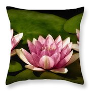 Three Water Lilies Throw Pillow by Susan Candelario