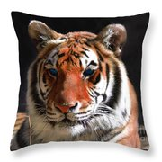 Tiger Blue Eyes Throw Pillow by Rebecca Margraf