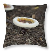 Toadstools Throw Pillow by Douglas Barnard