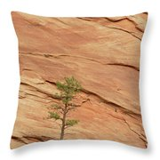 Tree Clinging To Sandstone Formation Throw Pillow by Gerry Ellis