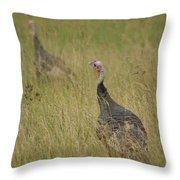 Turkeys Throw Pillow by Michael Peychich
