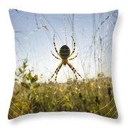 Wasp Spider Argiope Bruennichi In Web Throw Pillow by Konrad Wothe