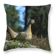 Western Capercaillie Tetrao Urogallus Throw Pillow by Konrad Wothe