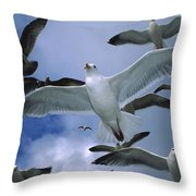 Western Gull Larus Occidentalis Flock Throw Pillow by Michael Durham/ Minden Pictures