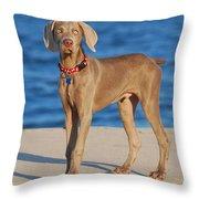 What - Weimaraner Puppy Throw Pillow by Angie Tirado