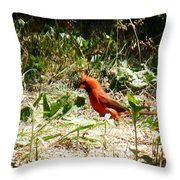 Where Did I Leave My Keys?? Throw Pillow by Alys Caviness-Gober