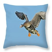 White-fronted Goose Anser Albifrons Throw Pillow by Winfried Wisniewski