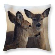 Whitetail Deer Throw Pillow by Ernie Echols