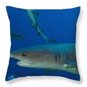 Whitetip Reef Shark, Papua New Guinea Throw Pillow by Steve Jones