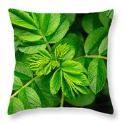 Whorled Branches With Developing Leaves Throw Pillow by Darlyne A. Murawski