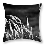 Wild grass in black and white Throw Pillow by Elena Elisseeva