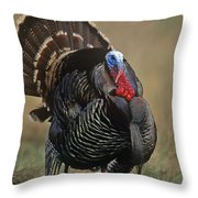 Wild Turkey Male North America Throw Pillow by Tim Fitzharris