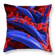 Yersinia Pestis Bacteria Sem Throw Pillow by Science Source