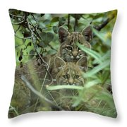 Young Bobcats Throw Pillow by Michael S. Quinton