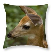 A Fawn At A Wildlife Rescue Members Throw Pillow by Joel Sartore