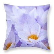 Crocus Flowers Throw Pillow by Elena Elisseeva