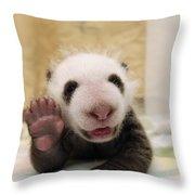 Giant Panda Ailuropoda Melanoleuca Cub Throw Pillow by Katherine Feng