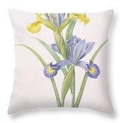 Iris Xiphium Throw Pillow by Pierre Joseph Redoute