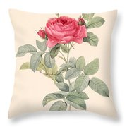 Rosa Gallica Pontiana Throw Pillow by Pierre Joseph Redoute