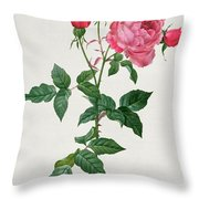 Rosa Indica Throw Pillow by Pierre Joseph Redoute