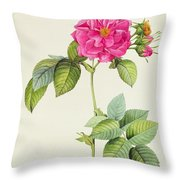 Rosa Turbinata Throw Pillow by Pierre Joseph Redoute