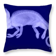 Veiled Chameleon X-ray Throw Pillow by Ted Kinsman