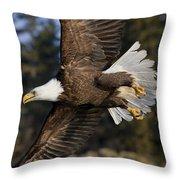 Bald Eagle Throw Pillow by John Hyde - Printscapes