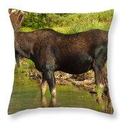 Moose Throw Pillow by Sebastian Musial