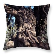 2000 Year Old Olive Tree Throw Pillow by Thomas R Fletcher