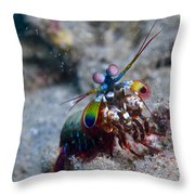 Close-up View Of A Mantis Shrimp, Papua Throw Pillow by Steve Jones