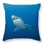 Male Great White Shark, Guadalupe Throw Pillow by Todd Winner