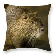 A Beaver From The Omaha Zoo Throw Pillow by Joel Sartore