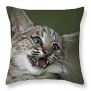 A Bobcat At A Wildlife Rescue Members Throw Pillow by Joel Sartore
