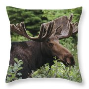 A Bull Moose Among Tall Bushes Throw Pillow by Michael Melford